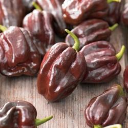 Papryka Habanero Chocolate - ostra, ciemnobrązowa