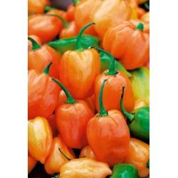 Papryka Habanero Orange - ostra, pomarańczowa