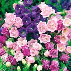 Dzwonek ogrodowy pełny - mieszanka - 400 nasion