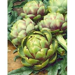 Karczoch Vert De Provence - niskokaloryczne, prozdrowotne warzywo - 20 nasion