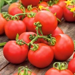Pomidor Promyk - gruntowy - 225 nasion