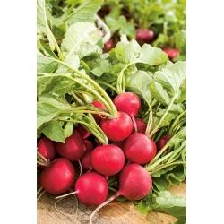 Rzodkiewka Tytania - wczesna, szczególnie polecana do wiosennej i jesiennej uprawy pod osłonami - 850 nasion