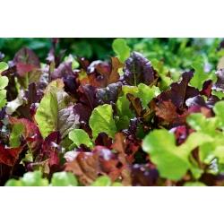 Mini ogród - Kolorowe cięte listki - do uprawy na balkonach i tarasach