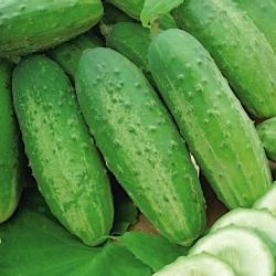 Ogórek konserwowy – Odys F1 - 110 nasion