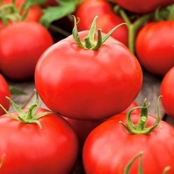 Pomidor gruntowy Alka – nasiona otoczkowane - 100 nasion