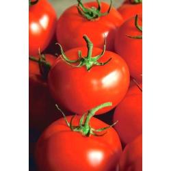Pomidor Ondraszek - gruntowy, na przetwory i do bezpośredniego spożycia