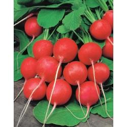 Rzodkiewka Fiesta - rośnie bardzo szybko, okrągło-sercowata, karminowa - 850 nasion