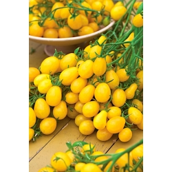 Pomidor czereśniowy Ildi - 80 nasion