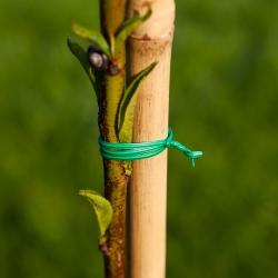 Drut ogrodniczy płaski, powlekany PCV 30m x 2mm