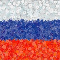 Rosyjska flaga - zestaw 3 odmian nasion kwiatów