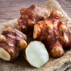 Słonecznik bulwiasty - Topinambur - smaczne warzywo i dekoracja - 1 bulwa