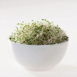 BIO Nasiona na kiełki - Wiesiołek - certyfikowane nasiona ekologiczne