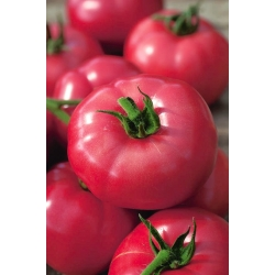 BIO Pomidor Faworyt - certyfikowane nasiona ekologiczne
