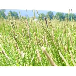 Tymotka łąkowa Kaba - 5 kg