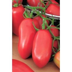 Pomidor gruntowy karłowy Malinowy Bosman - średniowczesny, doskonały na przetwory