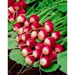 Rzodkiewka Polina - średniowczesna, polecana do uprawy w gruncie i pod osłonami - 850 nasion