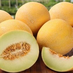 Melon Masada - jedna z najsmaczniejszych odmian na rynku - 10 nasion