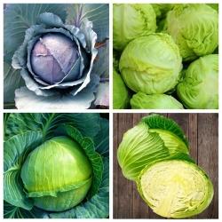 Kapusta - zestaw 4 odmian nasion warzyw