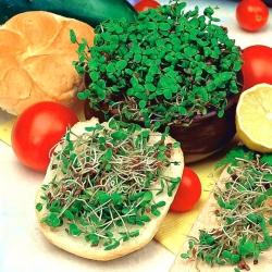 Nasiona na kiełki - Len - 1500 nasion