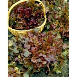 BIO Sałata liściowa - Red Salad Bowl - Certyfikowane nasiona ekologiczne