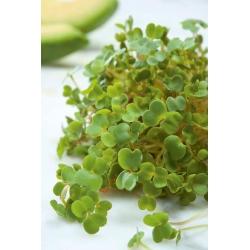 Nasiona na kiełki Smak Zdrowia - gorczyca sarepska - 12000 nasion