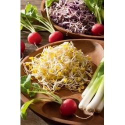 BIO Nasiona na kiełki - Rzodkiewka - Certyfikowane nasiona ekologiczne - 1700 nasion