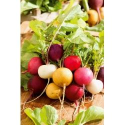 Rzodkiewka kolorowa - mieszanka odmian - 850 nasion