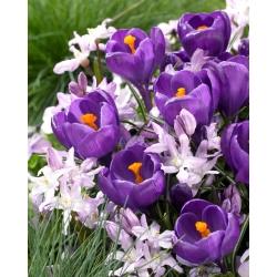 Zestaw krokus fioletowy i śnieżnik różowy - 100 szt.