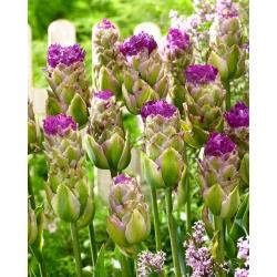 Tulipan Purple Tower - duża paczka! - 50 szt.