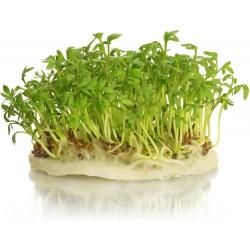 Nasiona na kiełki - Rzeżucha - 500 gram