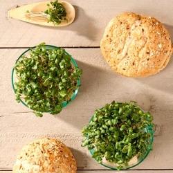 Microgreens - Brukiew - młode listki o unikalnym smaku