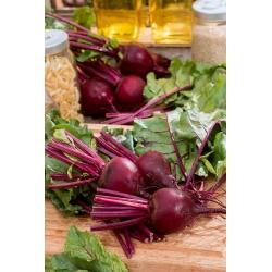Burak ćwikłowy Bona - 500 gram - nasiona profesjonalne dla każdego