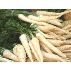 Pietruszka Alba - korzeniowa - 50 gram - nasiona profesjonalne dla każdego