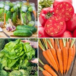 Zestaw M - 4 odmiany nasion warzyw, kolekcja sprawdzonych odmian