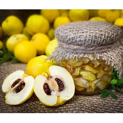 Pigwowiec - świeże owoce prosto z krzewu - 1 kg