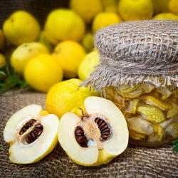 Pigwowiec - świeże owoce prosto z krzewu - 10 kg