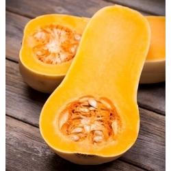 Dynia piżmowa - Butternut - 16 nasion