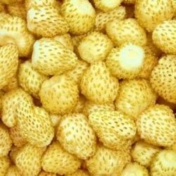 Poziomka żółta Yellow Wonder - 320 nasion