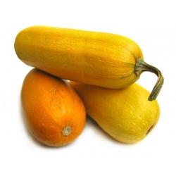 Dynia zwyczajna makaronowa PYZA - 14 nasion