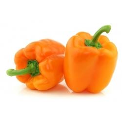 Papryka słodka pomarańczowa - Etiuda - 75 nasion