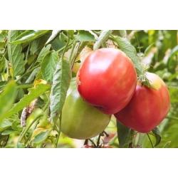 Pomidor Malinowy Olbrzym - 400 nasion