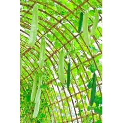 Tykwa pospolita Snake - 24 nasion