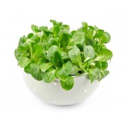 Roszponka warzywna - 1700 nasion