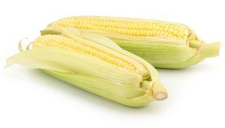 Kukurydza cukrowa - Gucio F1 - 60 nasion