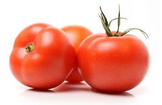 Pomidor Antares F1