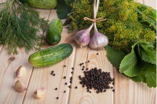 Ogórek gruntowy Śremski - 100 gram - 3500 nasion