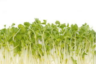 Nasiona na kiełki - Groch
