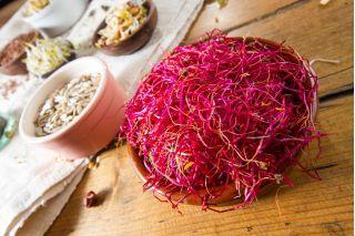 Nasiona na kiełki - Burak liściowy czerwony - 450 nasion