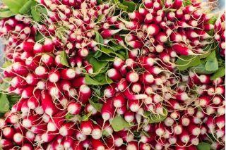 Rzodkiewka De dix-huit jours – nasiona otoczkowane - 300 nasion