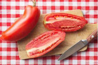 Pomidor Scatolone 2 - gruntowy, w kształcie papryki, idealny na przeciery